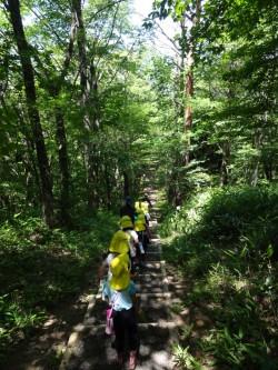 広い森林を散策